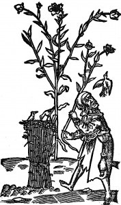 lniane-nasienie