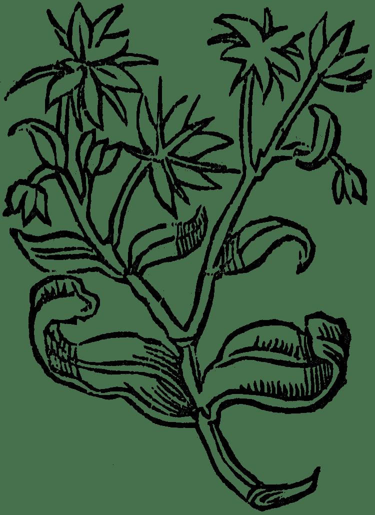 kotewki