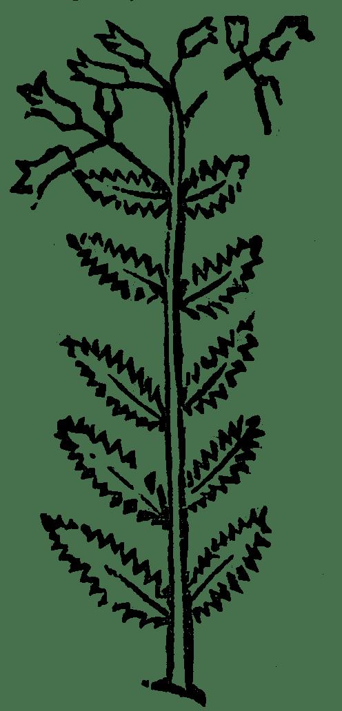 wężowy trunk