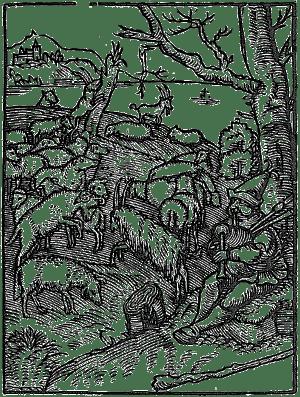 baran trzodny 002