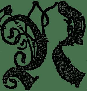 wołowego języku