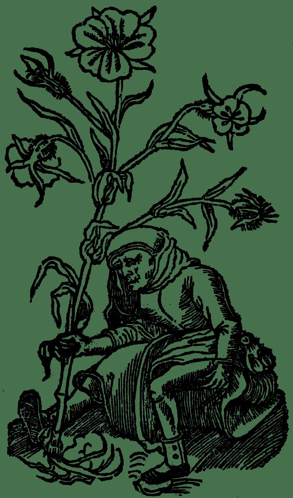 czarnucha