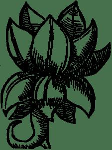 rhum moskiewskie
