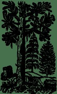 Orle albo rajskie drzewo